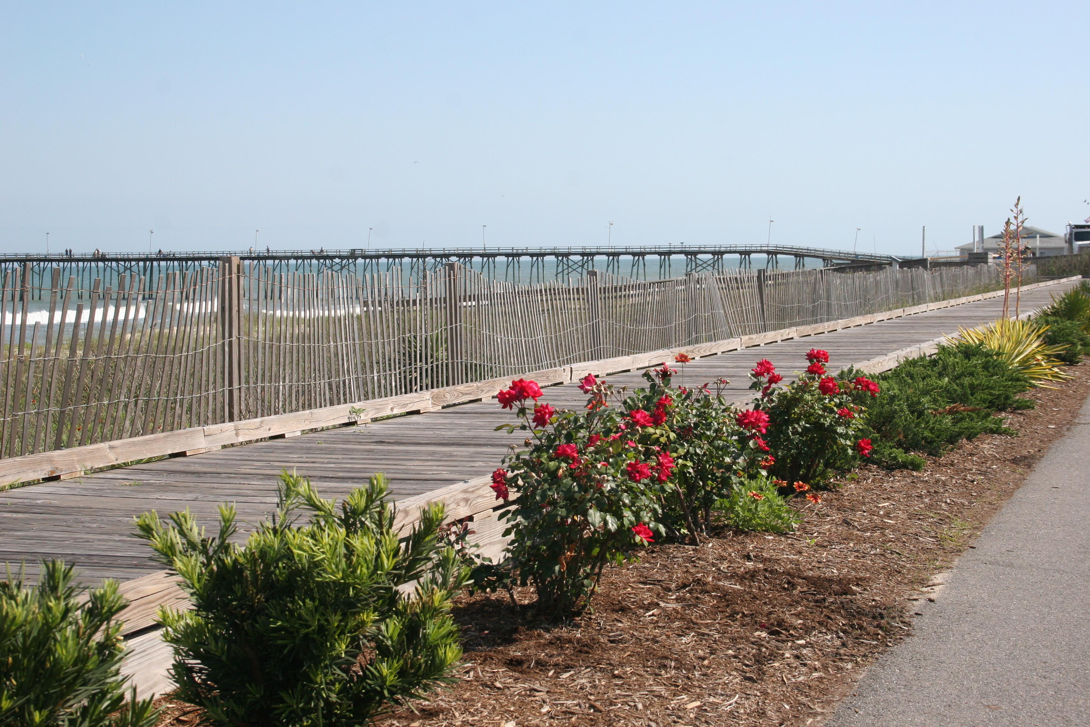 roses-ocean.jpg